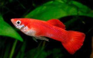 Какие рыбки для маленького аквариума