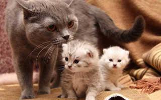 Еда для кормящей кошки