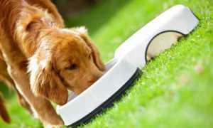 Рейтинг лечебных кормов для собак