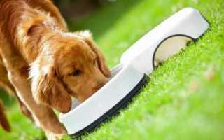Топ кормов для крупных собак