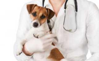 Надо ли стерилизовать собаку