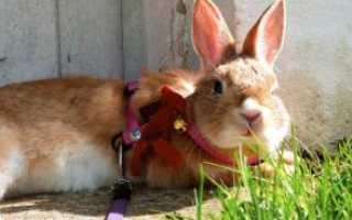 Вика для кроликов