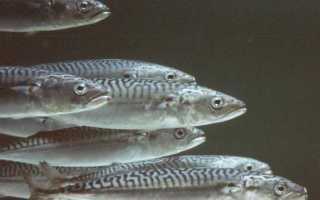 Животные питающиеся рыбами