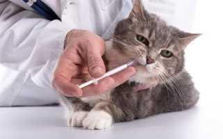 Чем кормить котенка при глистах