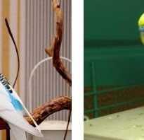Виды домашних попугаев фото и цены