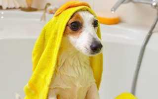 Щенку мыть дома стоимость