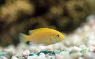 Рыбка колибри фото