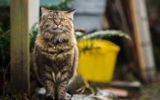 Мочекаменная болезнь у котов признаки лечение
