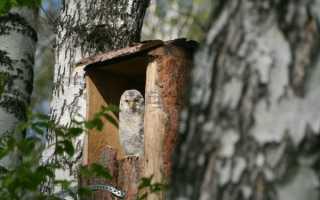 Дом для сов