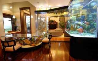 Рыбки домашние уход и содержание