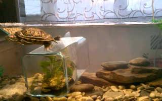 Как менять воду черепахам