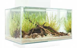 Какой должен быть аквариум для рыбок
