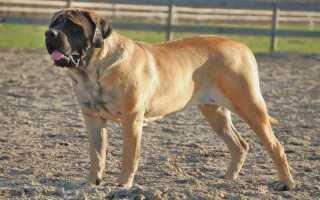 10 крупных пород собак