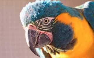 Как назвать попугаев мальчика и девочку