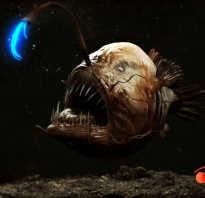 Светящаяся рыба глубоководная