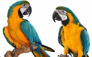 Попугай ара цена в москве