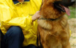 Полицейский питомник немецких овчарок в москве