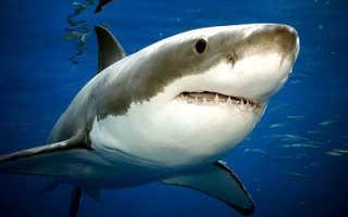 Акула место обитания