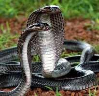 Бело желтая змея название