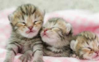 Во сколько кошки открывают глаза