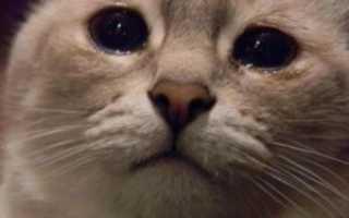 У кошки начали слезиться глаза