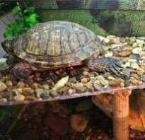Мостик для черепахи своими руками