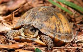 Почему черепаха кусает другую черепаху