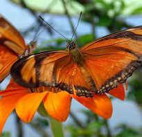 Бабочки образ жизни