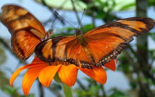 Образ жизни бабочки