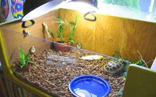 Террариум своими руками для черепахи
