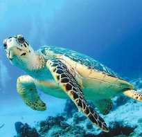 Как спят морские черепахи