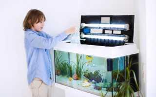 Как следить за аквариумом с рыбками