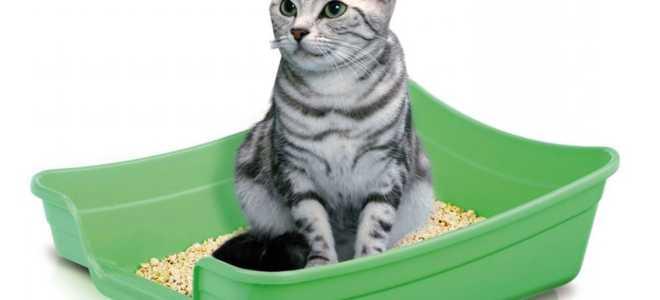 Котенок периодически ходит не в лоток