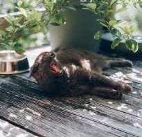 Панкреатит у кота лечение