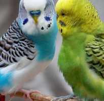Попугаи в дикой природе