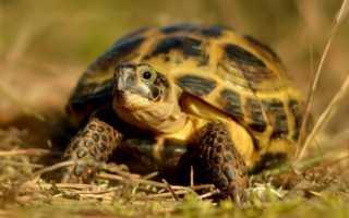 Грунт для черепах