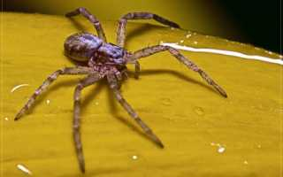 Сколько у паука лап и глаз