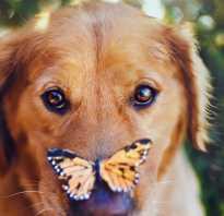 У собаки забит нос что делать