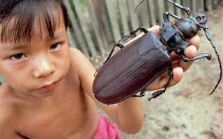 Могут ли тараканы кусать человека ночью фото