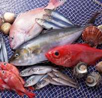 Семейство тунцовых рыб список