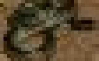 Калифорнийская поперечнополосатая змея