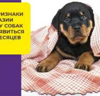 Болезни тазобедренных суставов у собак