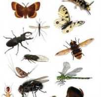 Редкие насекомые крыма
