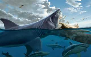 Самая большая вымершая акула в мире