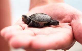 Маленькие домашние черепахи