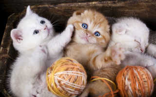 Чем кормить котенка 3 мес