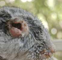 Все болезни кроликов