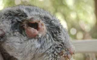 Кролиководство болезни кроликов и их лечение