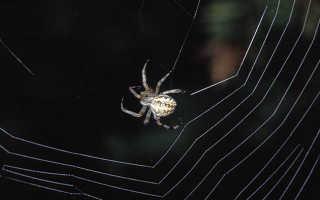 Виды паутины у пауков