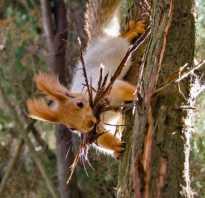 Белки размножение в природе